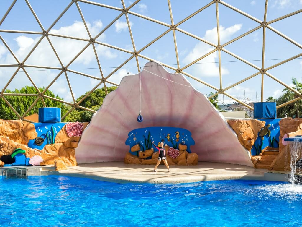Eine Show im Miami Seaquarium