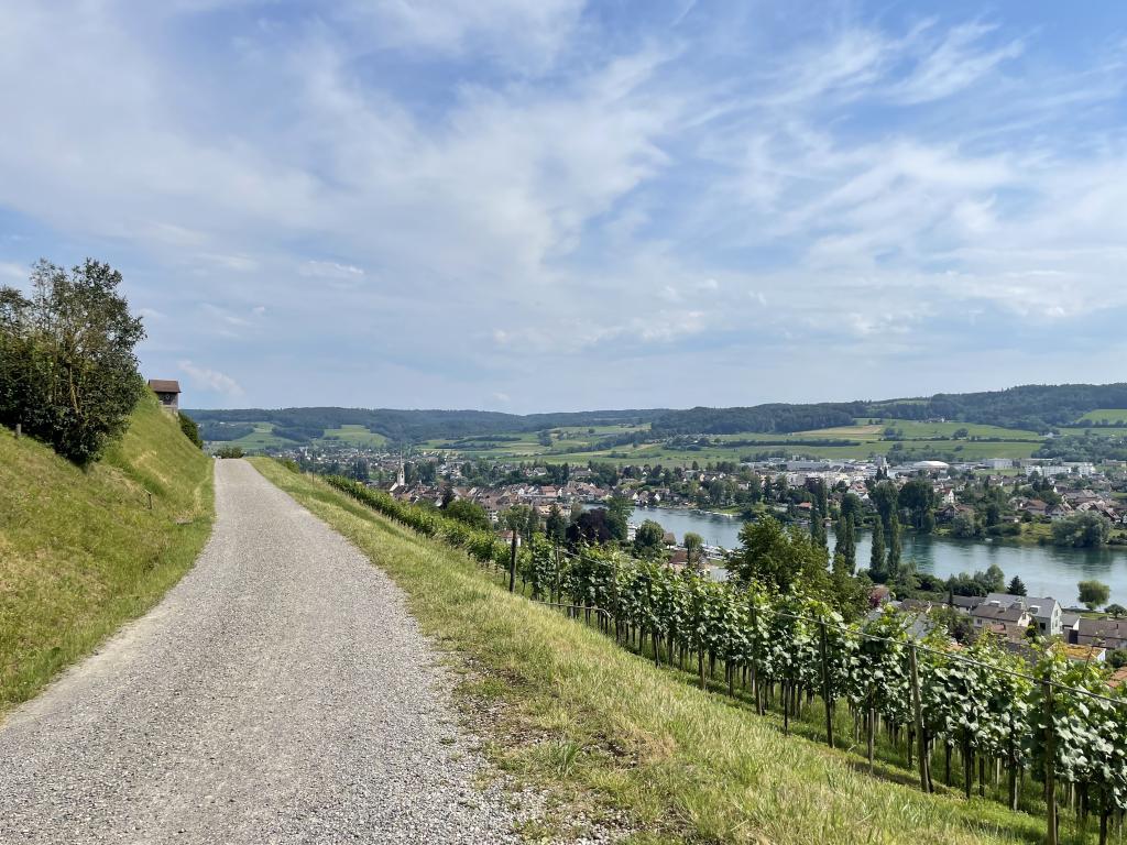 Weinberge Stein am Rhein